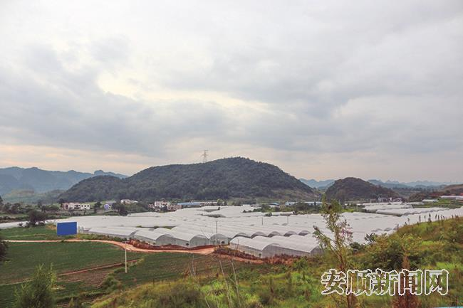 后寨灌区已建的韭黄育苗大棚基地.jpg