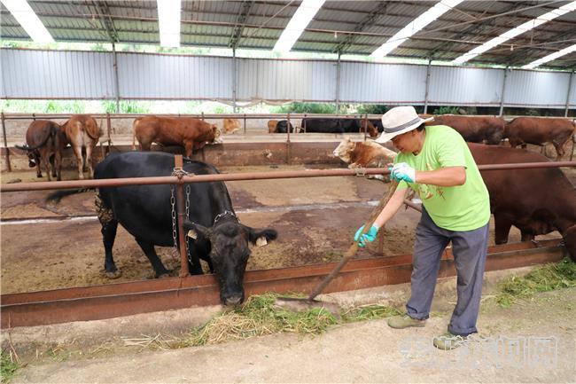 杨永波在博新公司养牛场稳定就业2.jpg