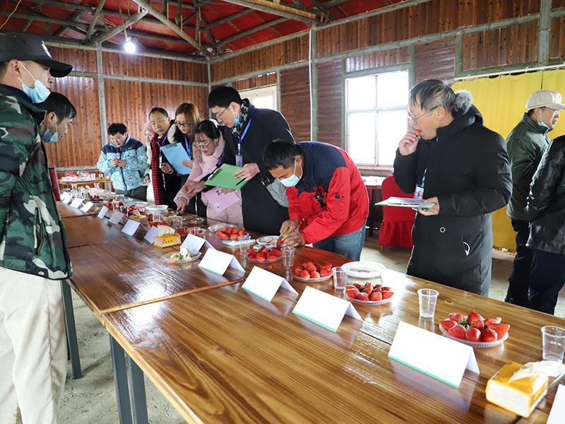 草莓精品擂台赛评审现场.jpg