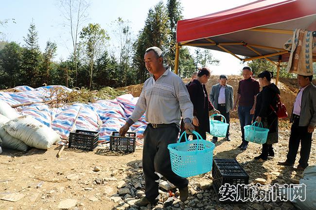 胡维胜在基地务工时,帮助客人采摘松茸2.jpg