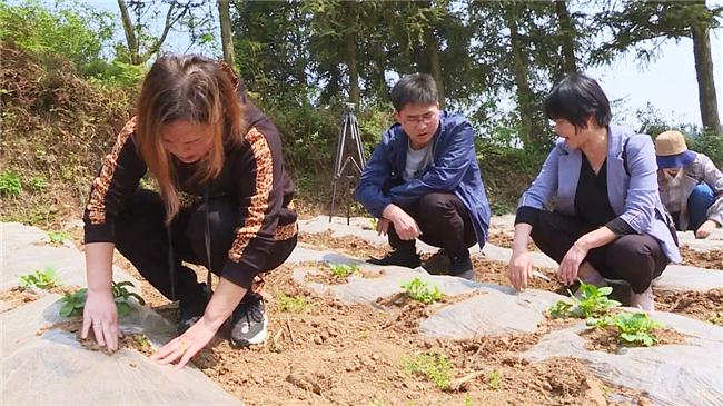 当地群众正在专家指导下栽种农作物.jpg