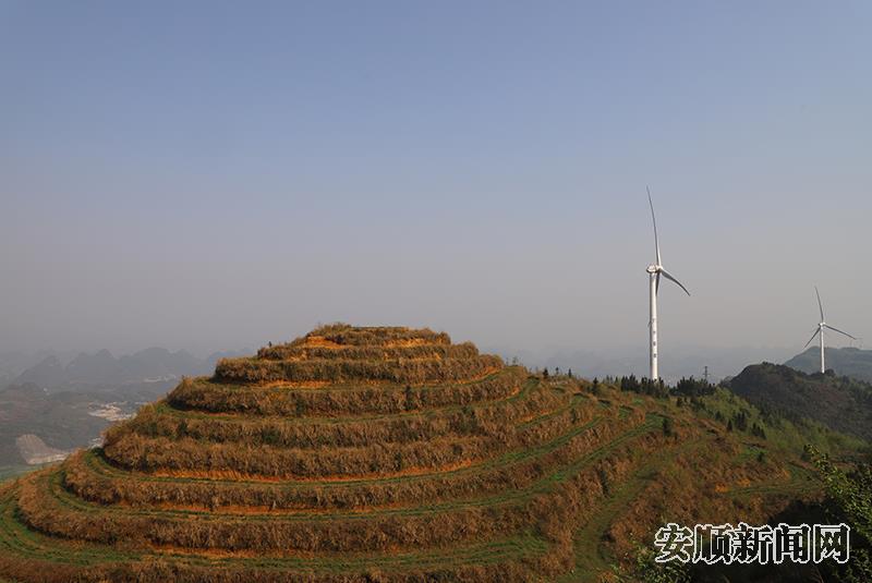 山体上的坡改梯种满了茶叶.jpg