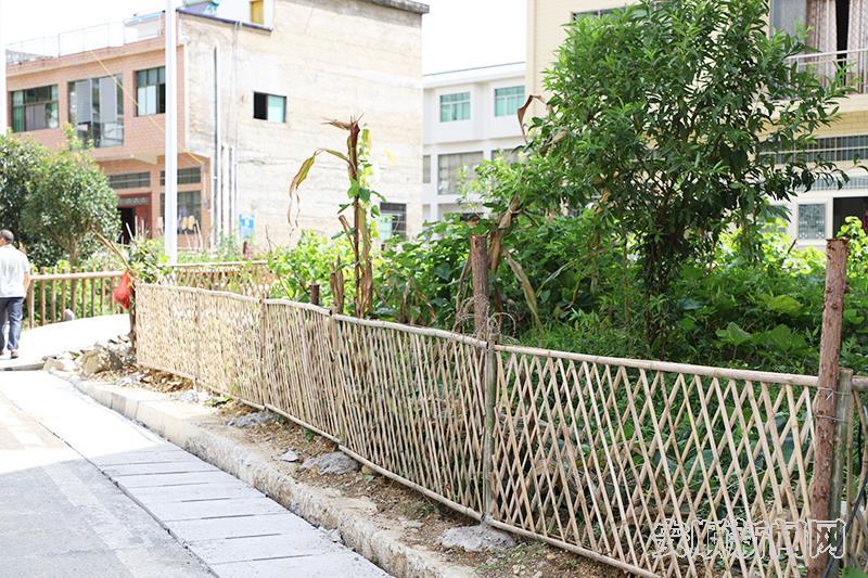 硐口村屋前屋后打造的菜园子.jpg