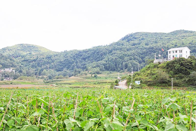 沙营镇前进村坝区种满了各类蔬菜.jpg